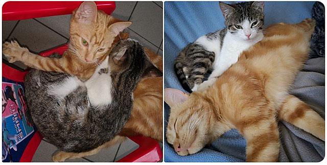 Emeline recherche son petit chat roux qu'elle n'a pas revu depuis dimanche...|Illustration DR