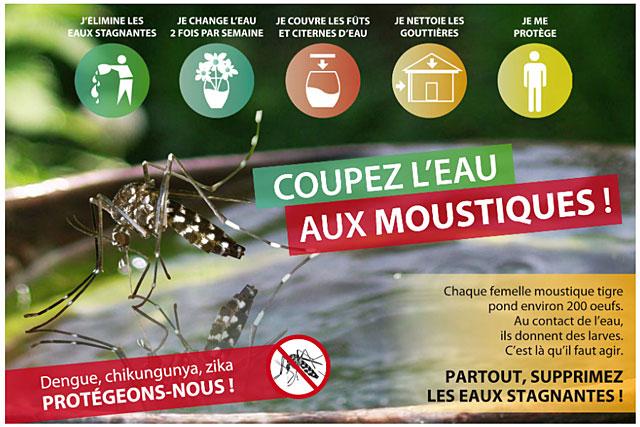 Le moustique tigre prolifère près des maisons et pond dans des petites quantités d'eau...|Photo ARS