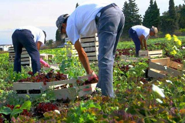 Malgré le Covid, les agriculteurs lot-et-garonnais peuvent recruter des saisonniers étrangers...|Illustration DR / ENTRAID-Cumas